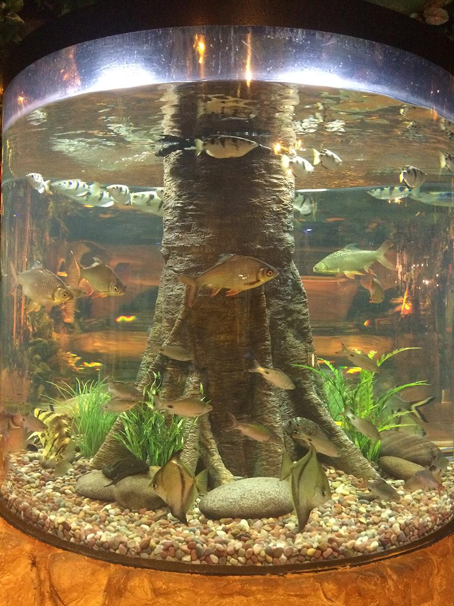 Landry's Aquarium, Kemah, TX