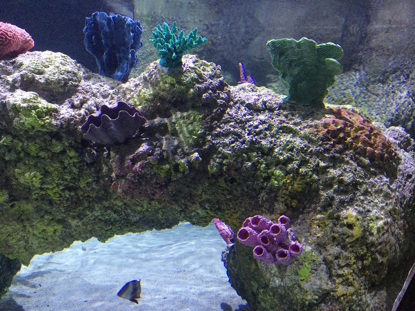 Austin Aquarium 5 Ocean Aquaria