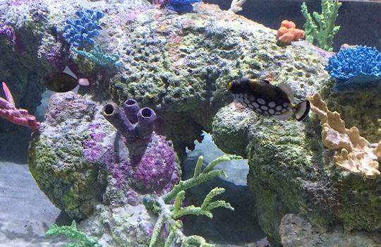 Commercial Aquarium Projects Gallery Ocean Aquaria