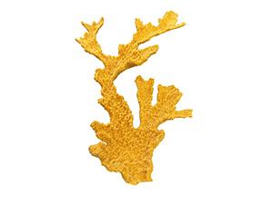 #87 XXL Elkhorn<br>Coral $229