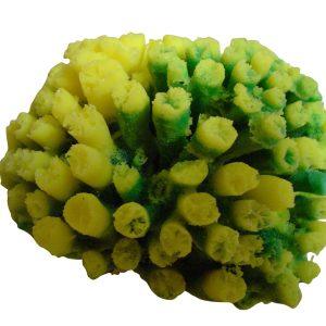 artificial coral galaxea coral