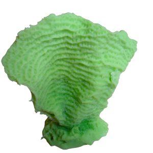 artificial coral mini lettuce coral agaricia