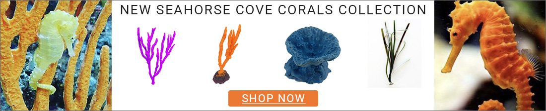 Seahorse Cove Corals Collection